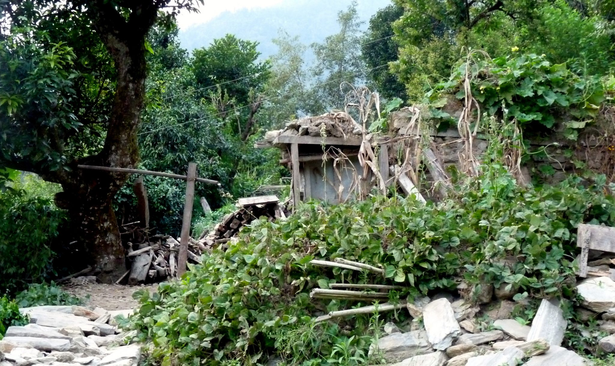 Foliage grows out of the remains of a house.