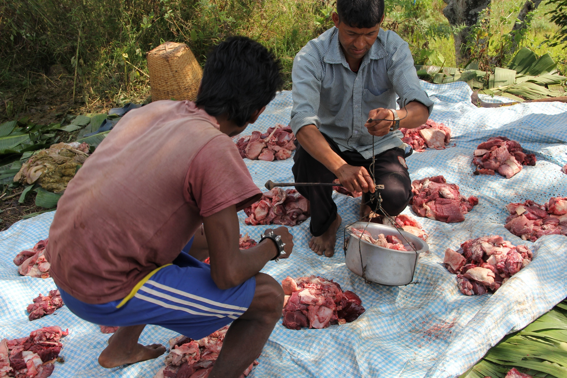 Villagers apportioning buffalo meat. During Dashain, outside every Hindu house, the ground is first sanctified and then either a buffalo or a goat is sacrificed. Eventually, the meat is used for the preparation of a big feast.